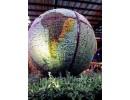 succulent globe.gif